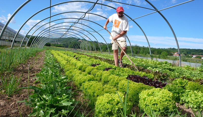 alternative farming techniques essay Organic farming for health & prosperity 4 peer-reviewed academic journals comprised the primary sources of information, along with reports from the us department of agriculture and the rodale institute.